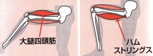 「大腿四頭筋_ハムストリング」の検索結果_-_Yahoo_検索(画像)