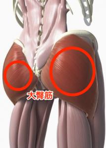 「大臀筋」の検索結果_-_Yahoo_検索(画像)-2